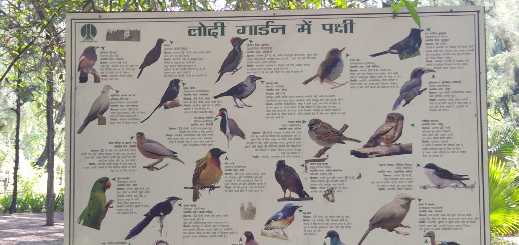 Birds in Lodhi Garden